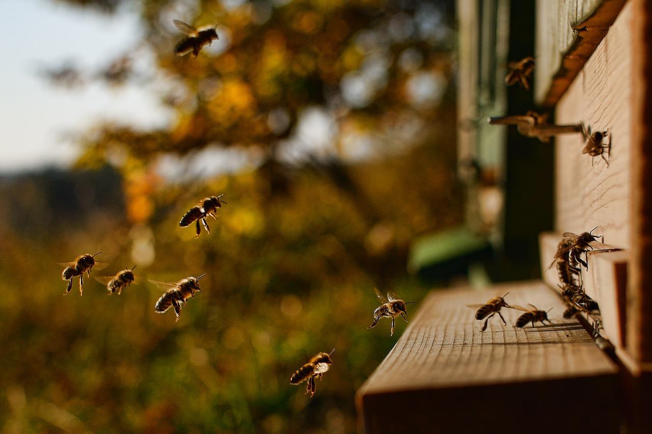 Kommunikation | Bienen fliegen Richtung Bienenstock